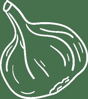 Knoblauch Zeichnung weiß
